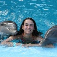 Дельфинотерапия в Крыму, Севастопольский дельфинарий переехал в Ласпи